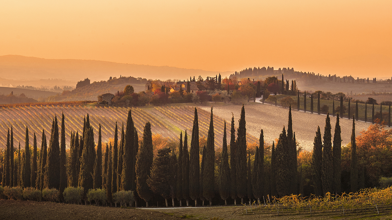 Cypresses Drenched in Orange